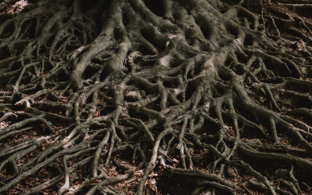 The Gnarled Roots of Depression